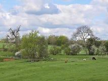 Paesaggio dell'azienda agricola con l'alpaca e le pecore Fotografia Stock Libera da Diritti