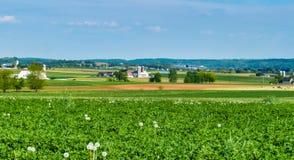 Paesaggio dell'azienda agricola dei Amish fotografie stock