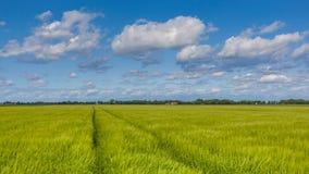Paesaggio dell'azienda agricola del campo di grano Fotografia Stock Libera da Diritti