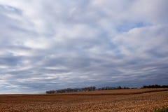 Paesaggio dell'azienda agricola del paese con gli alberi sull'orizzonte Fotografia Stock