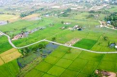 Paesaggio dell'azienda agricola del riso Immagine Stock