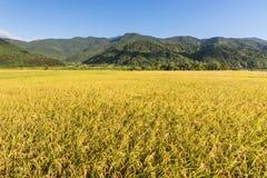 Paesaggio dell'azienda agricola della risaia Immagini Stock Libere da Diritti