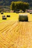 Paesaggio dell'azienda agricola di estate con i mucchi di fieno nel campo Immagini Stock Libere da Diritti