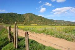 Paesaggio dell'azienda agricola, Santiago, peperoncino rosso Fotografia Stock Libera da Diritti