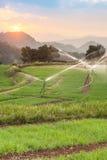 Paesaggio dell'azienda agricola verde del riso Fotografie Stock Libere da Diritti