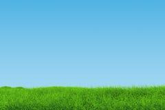 Paesaggio dell'erba Immagine Stock