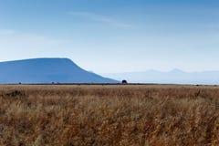 Paesaggio dell'erba e della montagna - Cradock Fotografia Stock