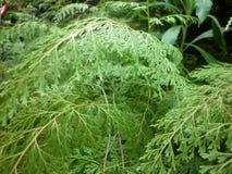 Paesaggio dell'erba verde Fotografie Stock Libere da Diritti