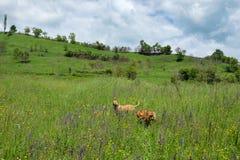 Paesaggio dell'Europa orientale - regione della Transilvania Fotografia Stock
