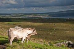 Paesaggio dell'Irlanda rurale, costa ovest Irlanda Immagini Stock