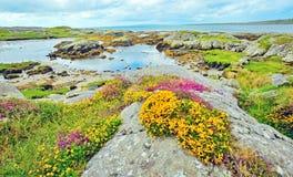 Paesaggio dell'Irlandese Fotografie Stock Libere da Diritti