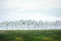 Paesaggio dell'isola del sud della Nuova Zelanda Fotografia Stock Libera da Diritti