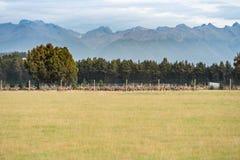 Paesaggio dell'isola del sud della Nuova Zelanda Immagini Stock Libere da Diritti