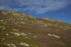 Paesaggio dell'isola della carcassa nelle Malvinas Fotografia Stock