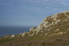 Paesaggio dell'isola della carcassa nelle Malvinas Immagine Stock Libera da Diritti