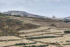 Paesaggio dell'isola maltese Gozo Immagine Stock Libera da Diritti