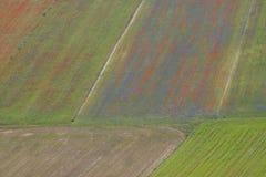 Paesaggio dell'Italia Fotografia Stock