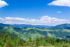 Paesaggio dell'montagne di Carpathians con gli abeti, vall erboso Immagini Stock