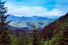 Paesaggio dell'montagne di Carpathians con gli abeti, vall erboso Immagine Stock Libera da Diritti