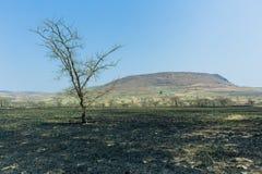 Paesaggio dell'ustione del fuoco dei pascoli fotografie stock