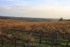 Paesaggio dell'uva Fotografie Stock Libere da Diritti