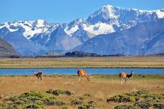 Paesaggio della bibbia - un campo e un lago Immagini Stock Libere da Diritti