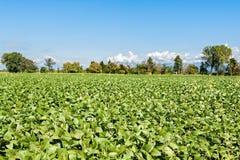 Paesaggio della campagna Campo della soia del cielo blu ancora Immagini Stock Libere da Diritti
