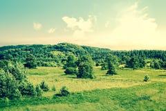 Paesaggio della campagna con gli alberi su un campo Immagine Stock Libera da Diritti