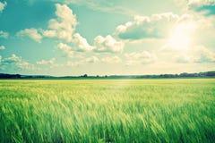 Paesaggio della campagna con i raccolti ed il sole Immagine Stock Libera da Diritti