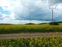 Paesaggio della campagna con il giacimento di petrolio del canola immagini stock