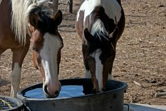 Paesaggio della campagna con un'acqua potabile di due cavalli della pittura Fotografia Stock