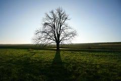 Paesaggio della campagna con un'ombra sola dell'albero fotografia stock