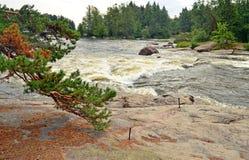 Paesaggio della cascata e del pino Fotografia Stock