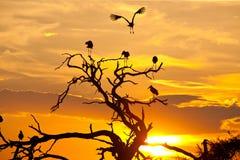 Paesaggio della cicogna di Maribu al tramonto Fotografia Stock Libera da Diritti