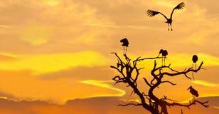 Paesaggio della cicogna di Maribu al tramonto Fotografia Stock