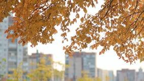 Paesaggio della città - alberi con le foglie dorate contro il contesto di grande città stock footage