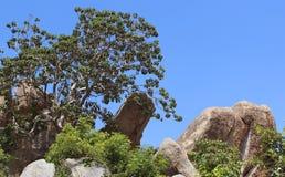 Paesaggio della collina delle rocce Fotografia Stock