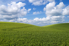Paesaggio della collina di rotolamento Fotografia Stock