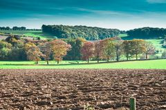 Paesaggio della collina nei colori di autunno Limburgo, Paesi Bassi fotografia stock libera da diritti