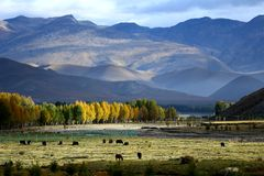 Paesaggio della contea di Daocheng Fotografie Stock Libere da Diritti