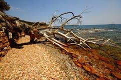 Paesaggio della Corsica (Francia) Fotografie Stock Libere da Diritti