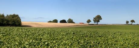 Paesaggio della Danimarca, campi Immagini Stock Libere da Diritti