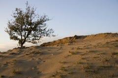 Paesaggio della duna e dell'albero Immagine Stock