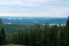 Paesaggio della foresta. Fotografie Stock