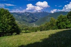Paesaggio della foresta Fotografie Stock Libere da Diritti