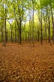 Paesaggio della foresta Fotografia Stock