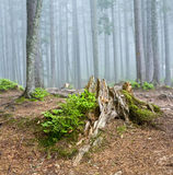 Paesaggio della foresta Immagine Stock Libera da Diritti