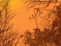 Paesaggio della foresta Fotografie Stock