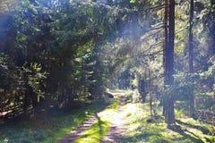 Paesaggio della foresta Immagini Stock