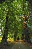 Paesaggio della foresta alla conclusione dell'autunno Fotografie Stock Libere da Diritti